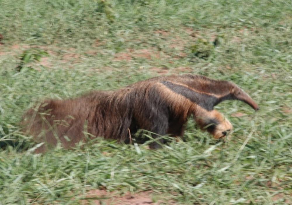 Silvo Pastoril - La fauna